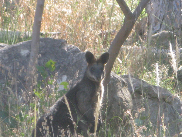 A friend we met on our Beechworth hike